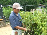 果樹苗木(フルーツ)栽培の職人。萩原です。