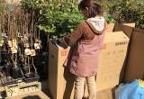 ブルーベリーなどの苗木を栽培生産、通販してます